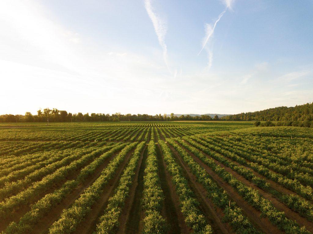 Agricultura_Nest2fly
